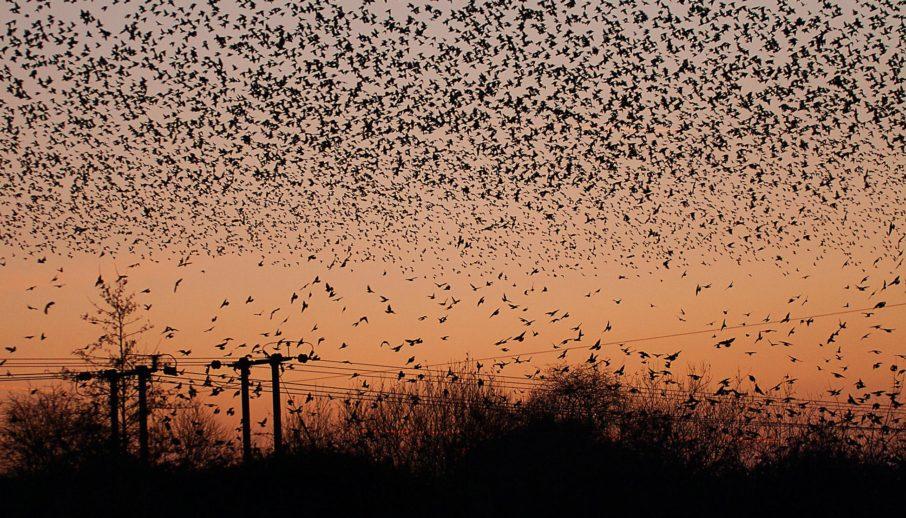 Come Fly With Me: Birdie's Monumental Murmuration